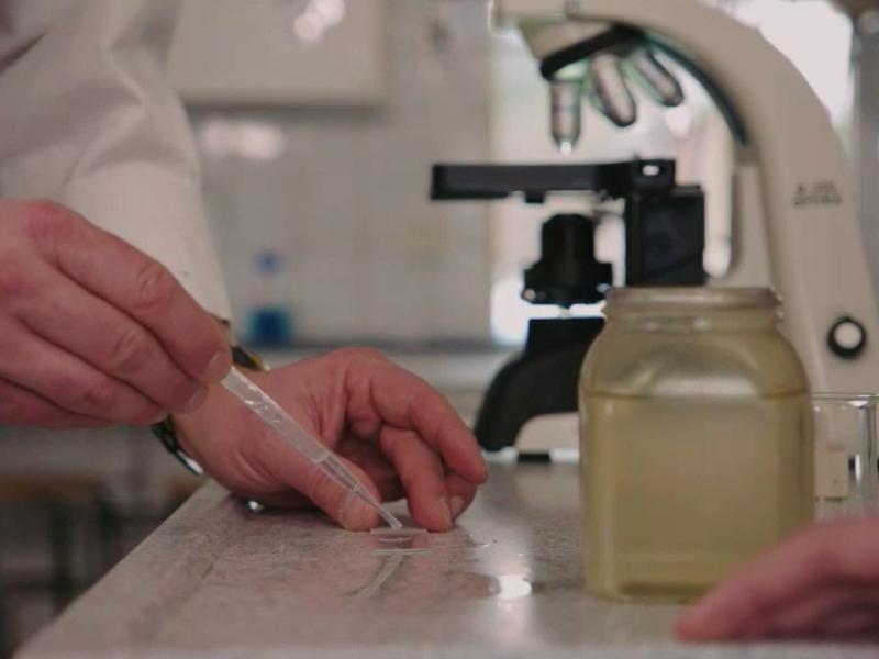 Älvstädningen undersöker förekomsten av mikroplaster i våra älvar